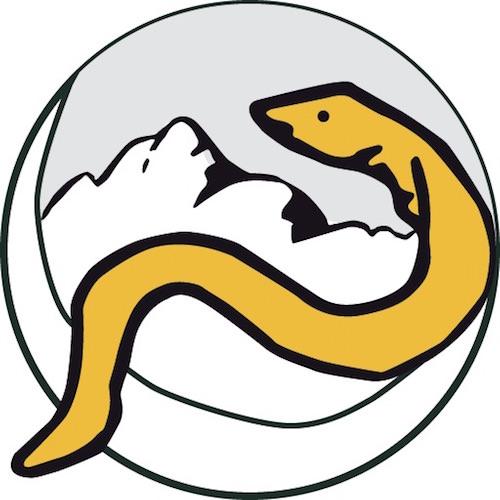 Anguille sous roche logo